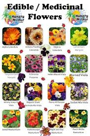 edible flowers best 25 edible flowers ideas on flower cubes