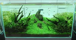 Aquascape Design Nature Aquariums And Aquascaping Inspiration