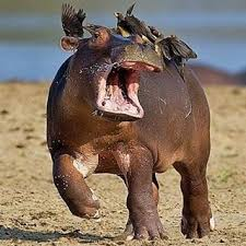 si e social hippopotamus much on my back for picture that one day i