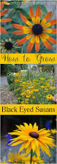 best 25 cottage garden plants ideas on pinterest cottage