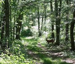 rhode island forest images 10 natural wonders in rhode island jpg