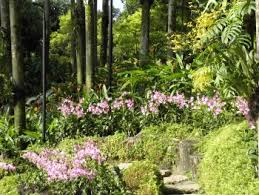 World Botanical Gardens Singapore Botanic Gardens Unesco World Heritage Site For World