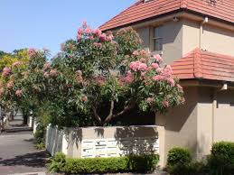 australian trees gardening with angus