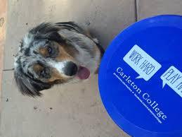 australian shepherd frisbee how to teach a dog how to catch a frisbee 10 steps