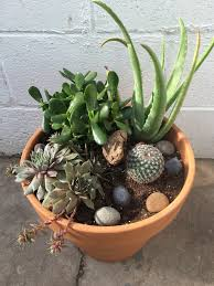 chic indoor succulent planter 63 indoor succulent container
