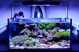 best lighting for corals the best nano reef tanks 2018 comparison aquarium info