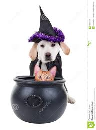halloween witch dog and cat stock photo image 43251546