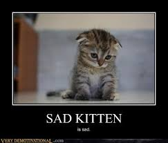 Sad Kitten Meme - sad kitty google search things for my wall pinterest sad kitty