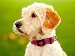 Gadgets For Pets Cool Pet Tech 3 Smart Gadgets For Your Dog Story