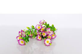 Baby Breath Flowers Buy Baby U0027s Breath Flower Online From The House Of Gifts Sri Lanka