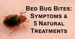 what do bed bug bites look like bed bug bites symptoms 5 natural treatments davidwolfe com