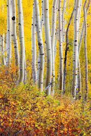 fall color ohio pass 0165 jpg adam schallau photography