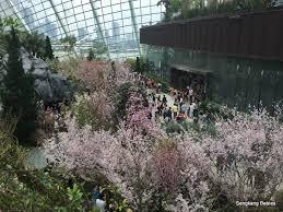 Different Types Of Japanese Gardens - different types of sakura gardens by the bay archives sengkang