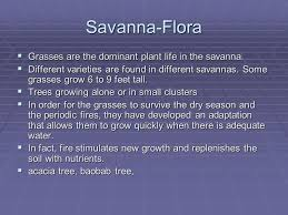 Tropical Savanna Dominant Plants - grasslands savanna tropical grassland and prairie temperate