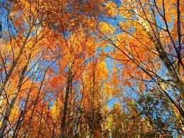 Minnesota nature activities images Our favorite fall activities in duluth minnesota wanderlocity jpg