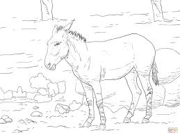 somali wild coloring page free printable coloring pages