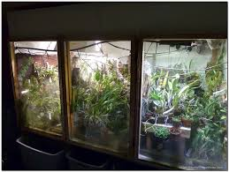 socker greenhouse 20 indoor basement greenhouse ideas ghe
