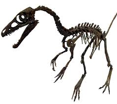 pixel halloween skeleton background file sinosauropteryxskull white background jpg wikimedia commons