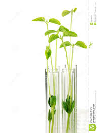 test tubes with small plants royalty free stock images image