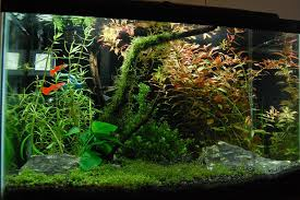 Most Beautiful Aquascapes 7 Beautiful Background Aquarium Plants Aquariadise
