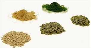 kit itas tatup archive 2012 heft 1 algae for