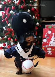 Weiner Dog Halloween Costumes 111 Crusoe Images Weenie Dogs Dachshund Humor