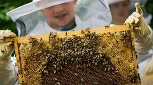 K He Selber Bauen Insektenhotels Selber Bauen Garten Kaffee Oder Tee Swr De