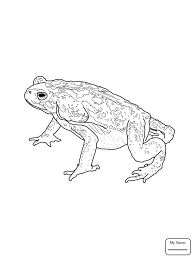 coloring pages kids american toad amphibian toads coloring7