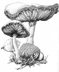 Scary Halloween Pictures To Draw How To Draw A Mushroom Mushroom Ink By Bigredsharks Traditional