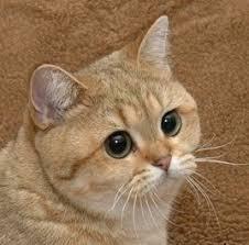 Meme Cats - starecat grafics cat know your meme