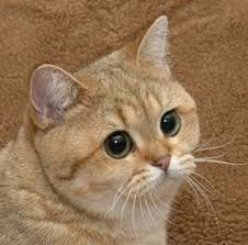 starecat grafics cat know your meme