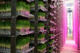 urban produce vertical farm grows 16 acres of food in just 1 8