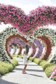 404 best dubai miracle garden dubai images on pinterest miracle