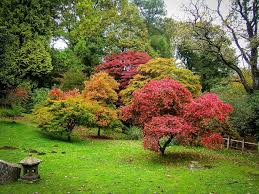 small japanese maple ornamental trees ornamental trees for
