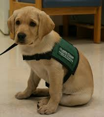 Blind Rehabilitation Western Blind Rehabilitation Center Wbrc Welcomes New Guide Dog
