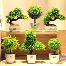 plante de bureau feng shui plante bureau petit plante pour bureau montpellier 21 plante
