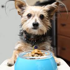 can you really cook food for your dog petsafe articles