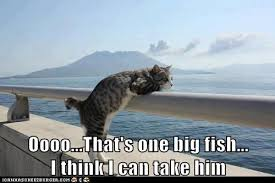 Cat Meme Boat - my eyes are bigger than my stomach lolcats lol cat memes