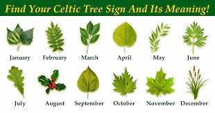 find your celtic tree sign and its meaning
