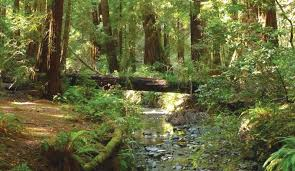 Muir Woods Map Best Day Trips Muir Woods Bay City Guide San Francisco