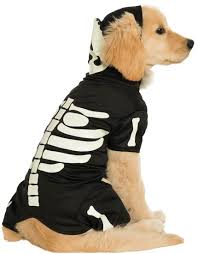 Halloween Skeleton Dog by 40 Adorable Halloween Costumes For Your Pet Holidaysmart