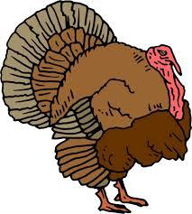 unique cartoon turkey animated clip file free