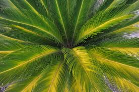images of sunkissed palm leaf wallpaper sc