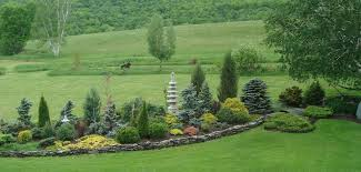 Evergreen Landscaping Ideas Evergreen Border Landscape Traditional With Yard Wooden Outdoor
