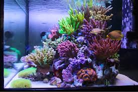 best lighting for corals masanao shibuya s sps reef tank is bordering on perfection acropora