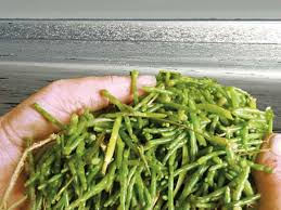 cuisiner salicorne salicorne cuisine française