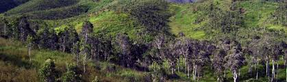 Tropical Dry Forest Animals And Plants - dry forest plants plants of new caledonia