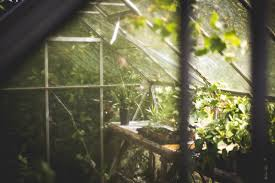 tips for growing the best pot in your diy greenhouse potguide com