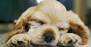 can u0027t sleep crank these sounds and go to bed in minutes greatist