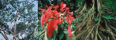 Dominant Plants Of The Tropical Rainforest - plants of the congo river basin forests wwf